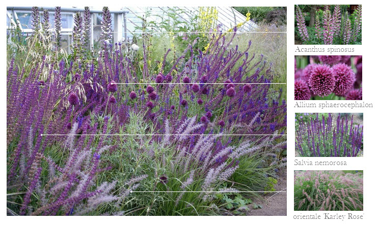 Gardens of a Temperate Nature on Pinterest Perennials