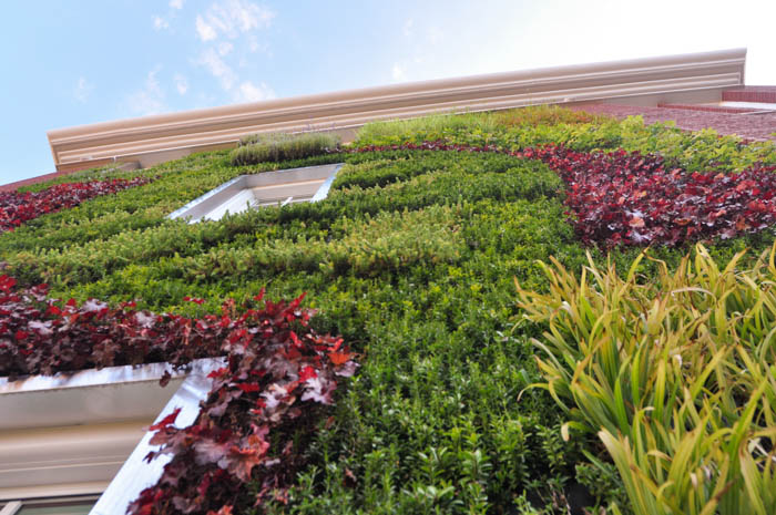 Living wall or Green wall at Queen's University Charlotte, NC