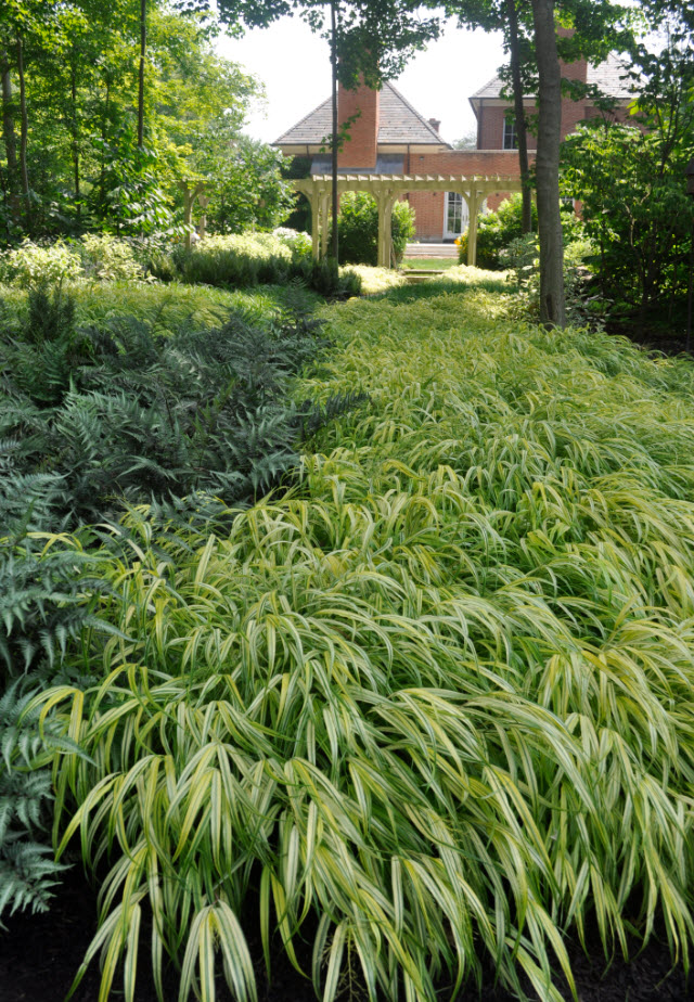Hakonechloa macra 'Aureola' : Kurt Bluemel - Horticultural Royalty Remembered -Thinking Outside the Boxwood,