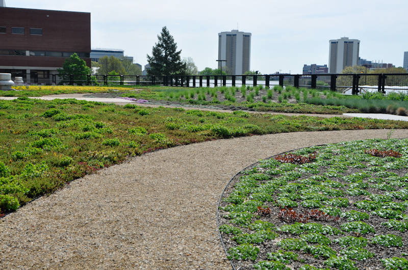 The Benefits of an Edge, Thinking Outside the Boxwood, Metal edging on a green roof in Columbus, Ohio, USA