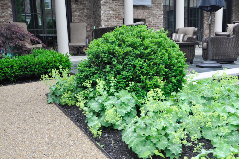 The Benefits of an Edge, Thinking Outside the Boxwood, Metal edging w/ Green Velvet Boxwood (Buxus 'Green Velvet') and Lady's Mantle (Alchemilla mollis 'Thiller')
