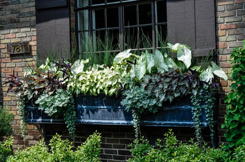 Annual Trip to Detroit,  Detroit Garden Work's Garden Cruise, Thinking Outside the Boxwood