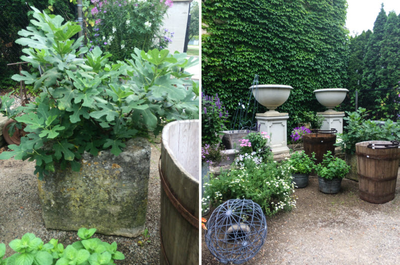Annual Trip to Detroit,  Detroit Garden Works, Thinking Outside the Boxwood