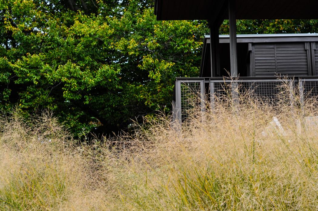 Yew Dell Botanical Garden Visit, Thinking Outside the Boxwood