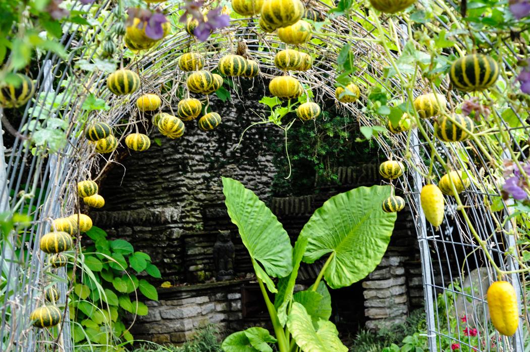 Yew Dell Botanical Garden Visit, Thinking Outside the Boxwood, Gourd Hut
