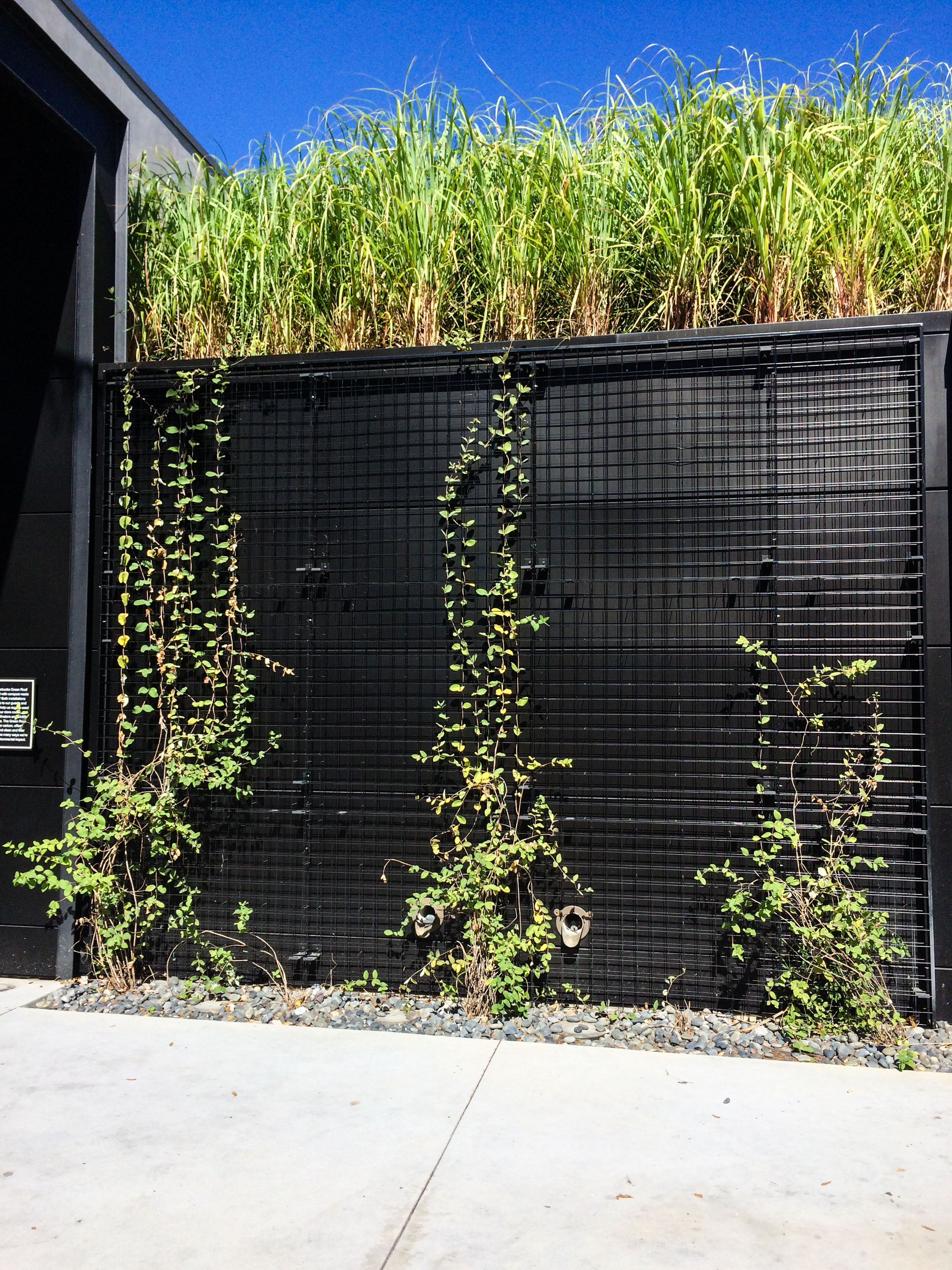 Case Study: Retail Embracing Green Space –Starbucks Downtown Disney, Thinking Outside the Boxwood