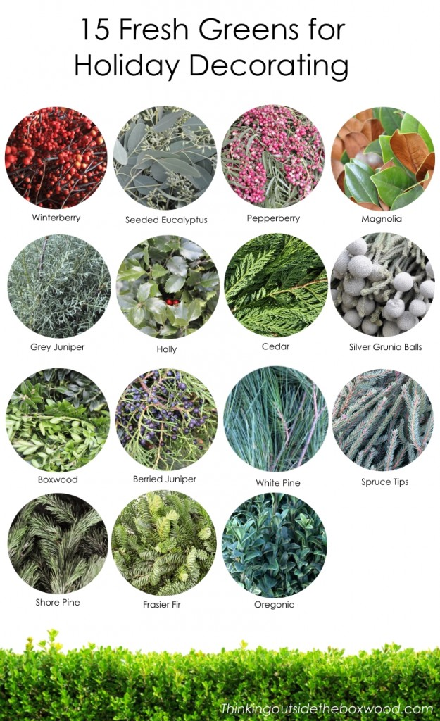 15 Fresh Greens for Holiday Decorating Containers, Wreaths or Garlands from Thinking Outside the boxwood
