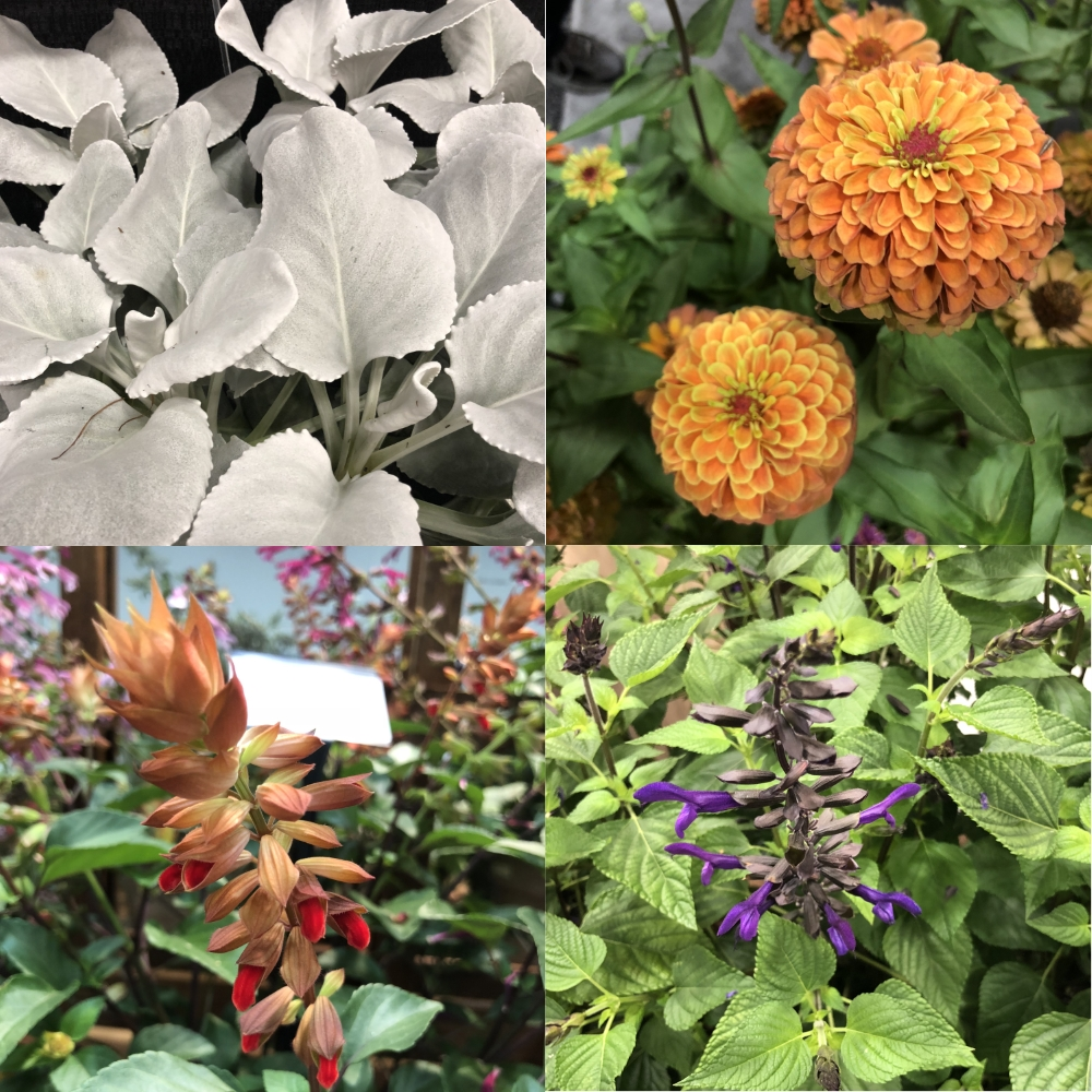 Cultivate 18 - Trade Show Recap, Thinking Outside the Boxwood
