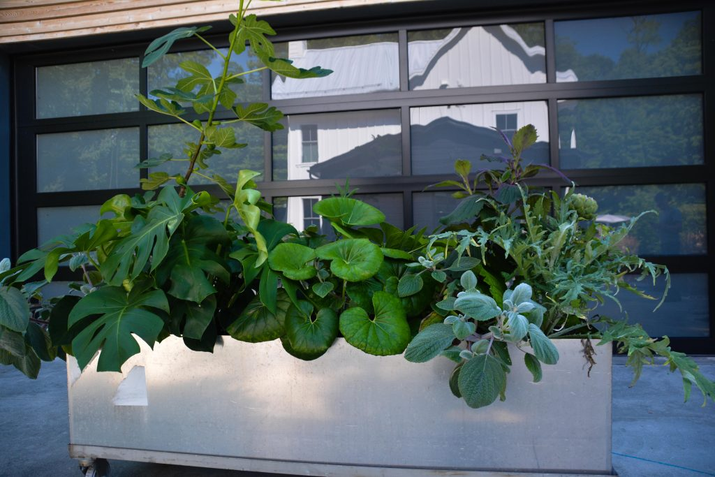 Large foliage container garden