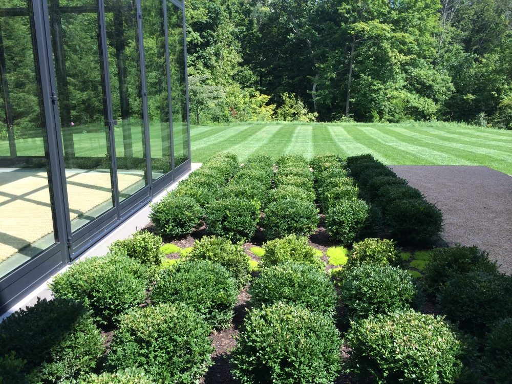 "Year zero - Boxwood Growth over Time. Planted in 2014 to be a table top design outside the greenhouse. Variety: Buxus 'Green Velvet' planted on 2"" centers. From Thinking Outside the Boxwood"