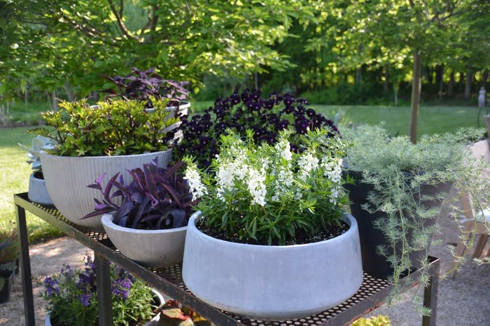 2018 Garden Learnings - Containers. Thinking Outside the Boxwood