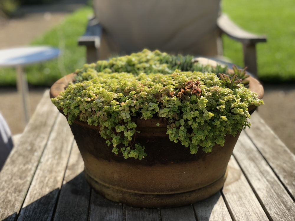 Container Designs from 2018 - table top container designs - Thinking Outside the Boxwood