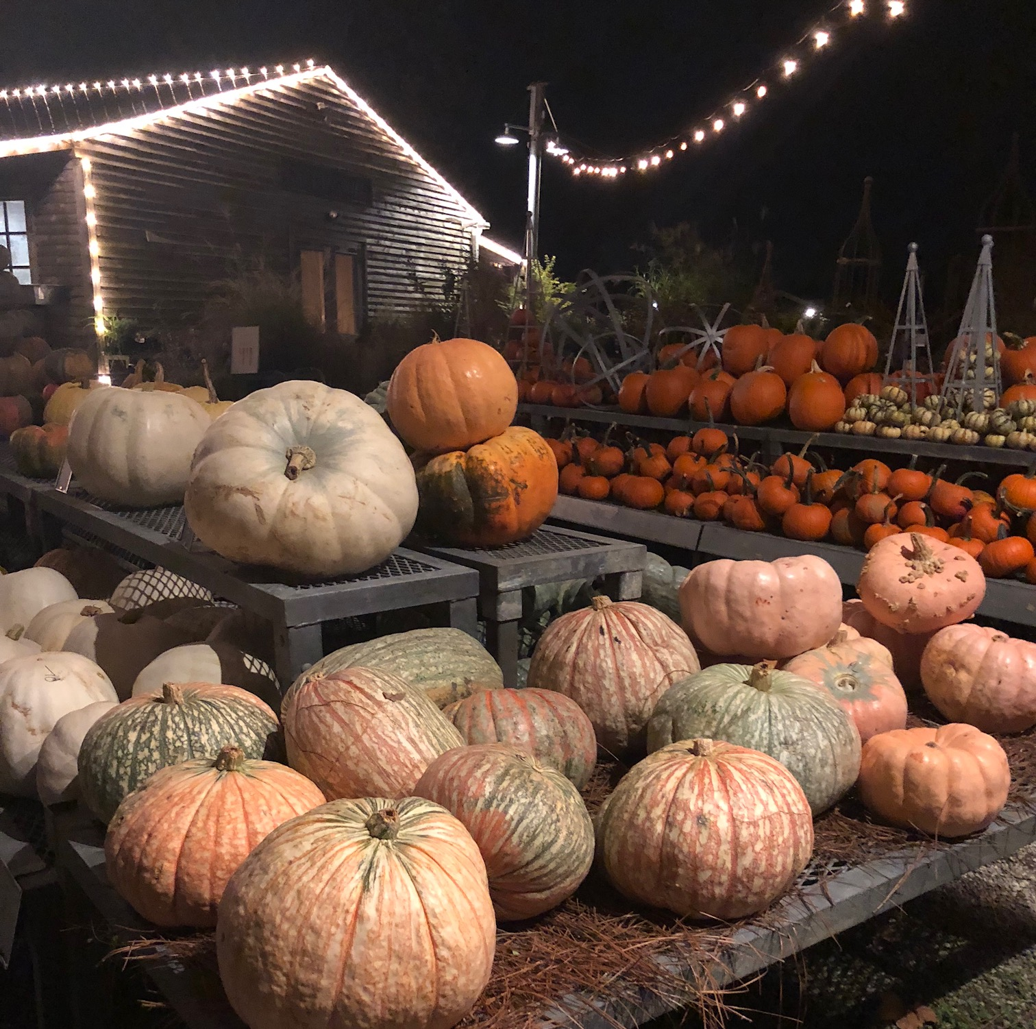 Pumpkins from Terrain at Glen Mills at the launch party for Terrain's new book - More at Thinking Outside the Boxwood