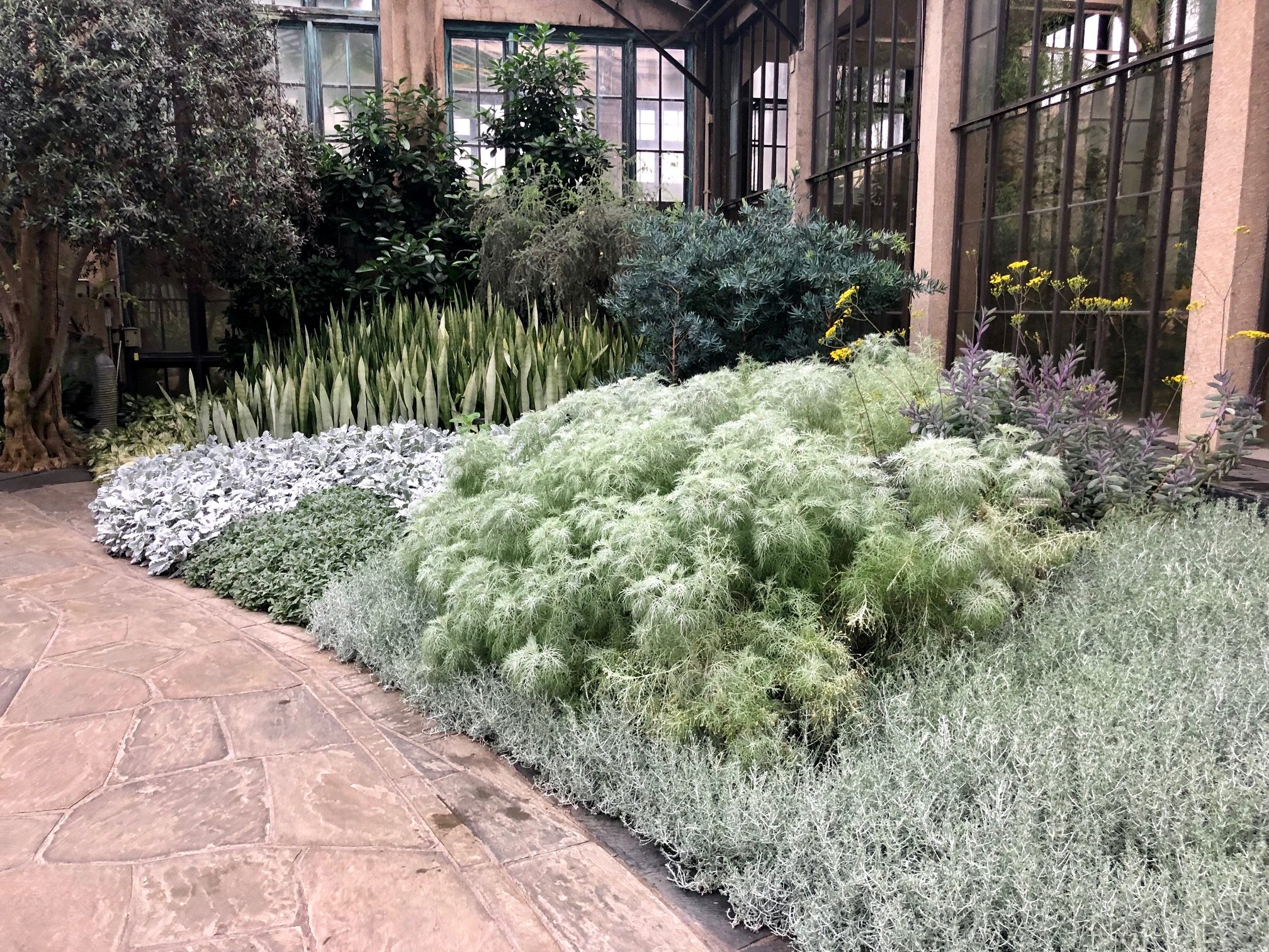 Swapping Perennials for Annual Color - taking Inspiration from the Silver Garden at Longwood Gardens. Thinking Outisde the Boxwood