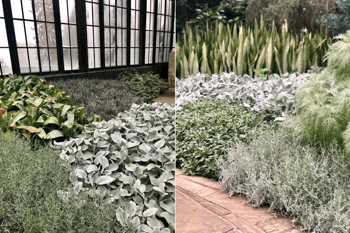 Swapping Perennials for Annual Color - taking Inspiration from the Silver Garden at Longwood Gardens. Thinking Outside the Boxwood