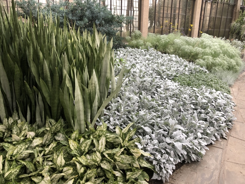 Longwood Gardens Silver Garden. Thinking Outside the Boxwood