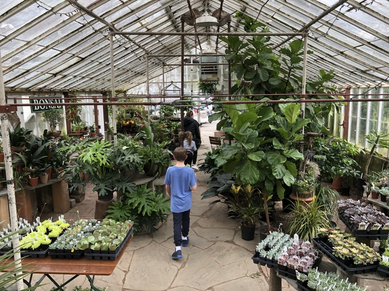 Michler's florist and greenhouse in Lexington Kentucky. Thinking Outside the Boxwood