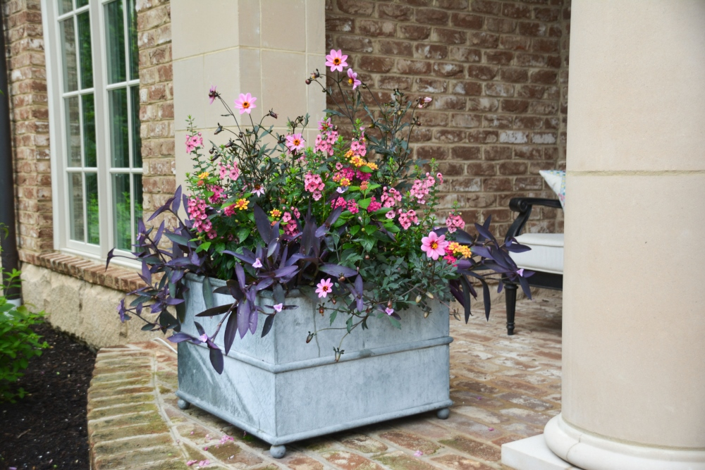 HOT MOSS container design. Using fresh pink annuals with moody purple container design. Thinking Outside the Boxwood.