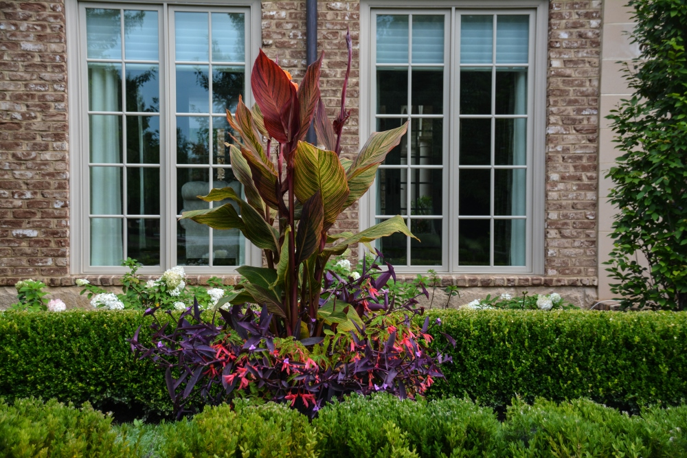 HOT TROPICAL Container design. These containers change year after year. See this year's containers on Thinking Outside the Boxwood