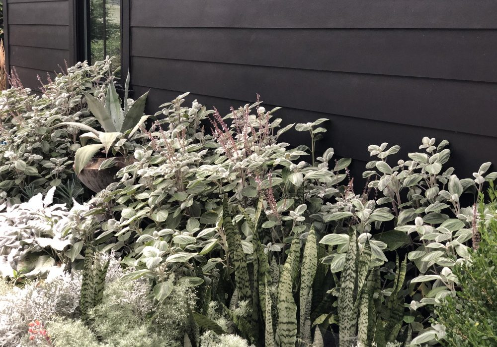 Summer Silver Garden | Thinking Outside the Boxwood | Design by Nick McCullough