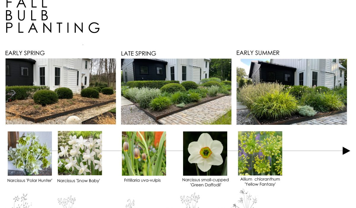 How to select spring and early summer flowering bulbs for bloom sequence and height within exisiting perennial garden - Thinking Outside the boxwood