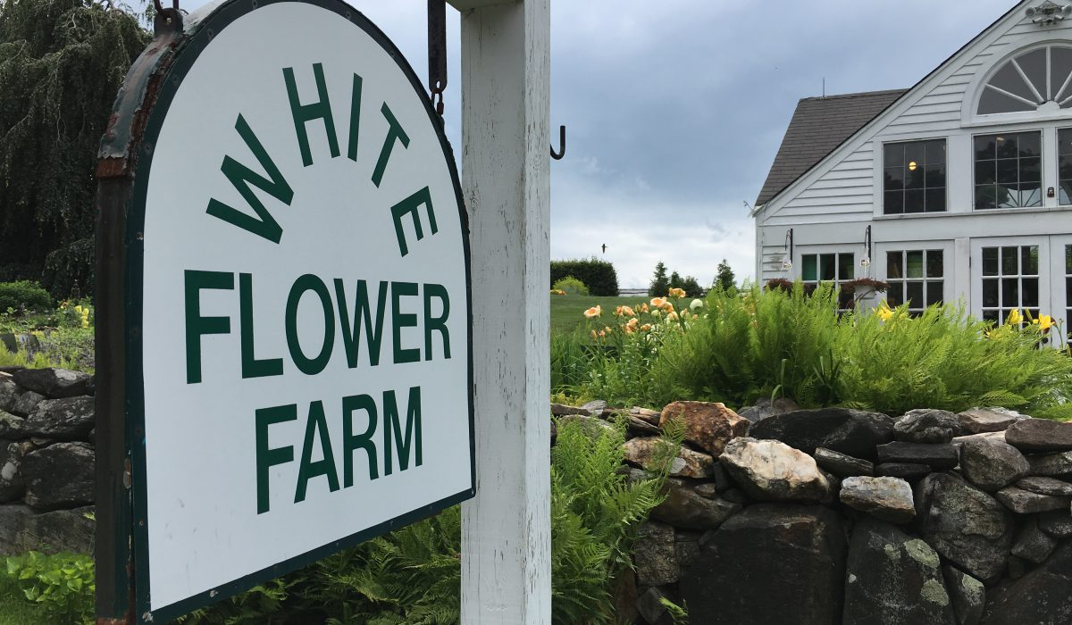 A visit to White Flower Farm, touring the greenhouses and walking the Lloyd Border - More at Thinkingoutsidetheboxwood.com